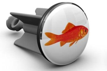 Un pesce rosso nel lavandino