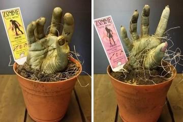 Zombie in vaso