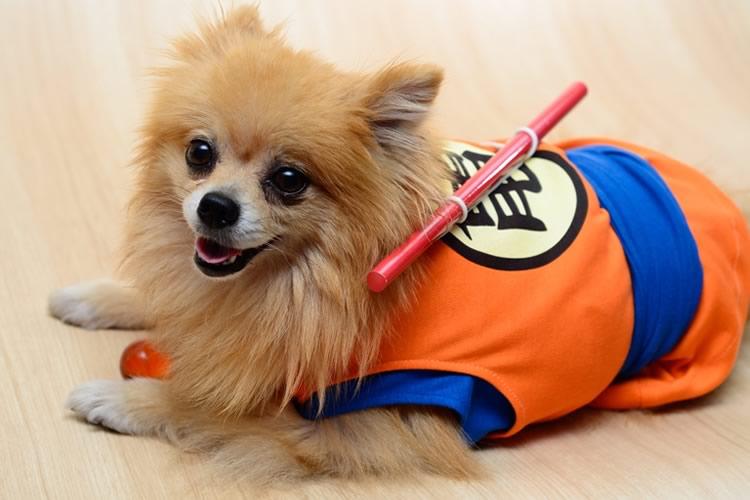 costume-dragonball-per-cani-1