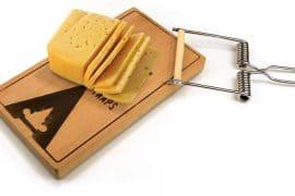 La trappola per formaggio