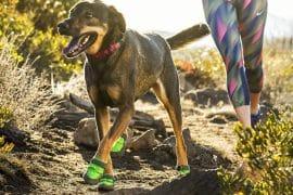 Scarpe da outdoor per cani