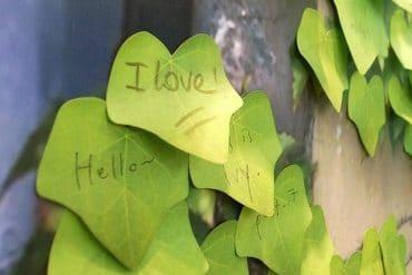 Le foglie per appunti