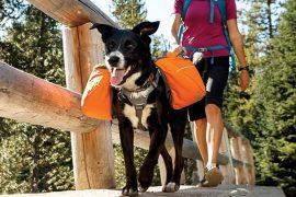 Tasche da trasporto per cani
