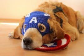 Costume per cani di Capitan America