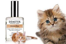 Profumo di pelo di gatto