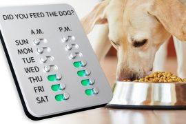 Ho dato da mangiare al cane?