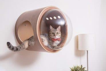 Casetta con oblò per gatti