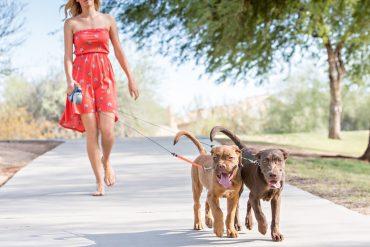 Guinzaglio doppio per cani