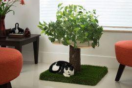 Alberi per gatti d'appartamento