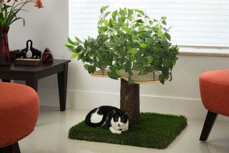 Piante Da Appartamento Per Gatti.Alberi Per Gatti D Appartamento
