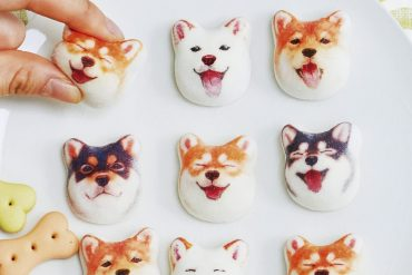 Marshmallows Shiba
