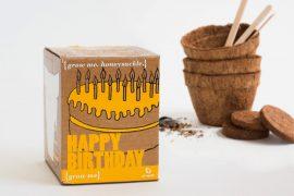 Kit per pianta Buon Compleanno
