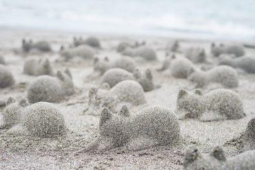 Formina gatto per sabbia