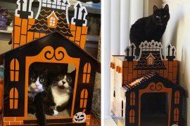 Casa infestata per gatti