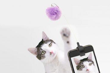 Attira gatti per selfie