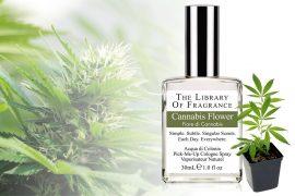 Profumo di Cannabis