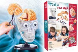 Cervello educativo per bambini