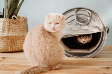 Lattina cuccia per gatti