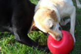 La palla indistruttibile per cani