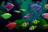 glofish-pesci-fluorescenti