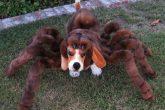 Costume da cane tarantola