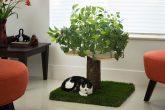 Alberi per gatti d'appartamento (1 piano)